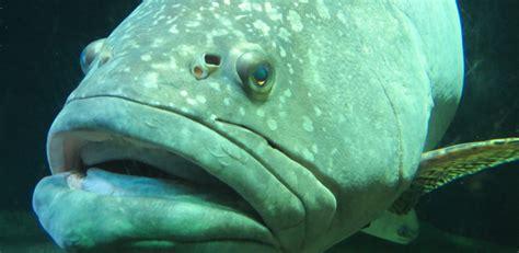 Los animales acuáticos más grandes del mundo marino   Zoo ...