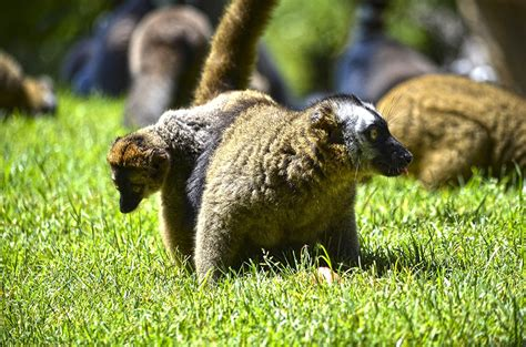 Los animales de BIOPARC dan la bienvenida al verano con ...