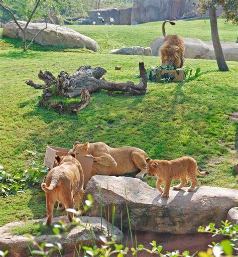 Los animales de Bioparc Valencia celebran el Día Mundial ...