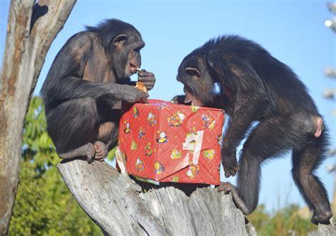 Los animales de Valencia también reciben sus regalos de ...