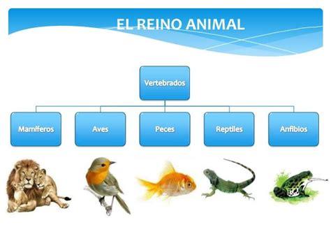 LOS ANIMALES INVERTEBRADOS: Los vertebrados no tienen un ...
