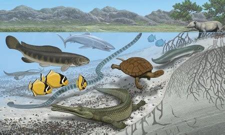 Los animales marinos más grandes del mundo vivieron en el ...