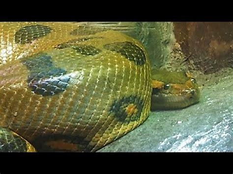 Los animales mas temibles de la selva   YouTube