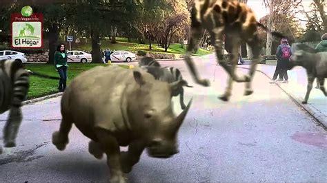 Los animales se fugan del Zoo de Madrid  subt. Español ...