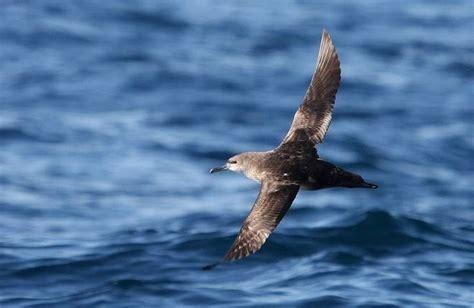 Los biólogos utilizarán los GPS para estudiar las aves ...