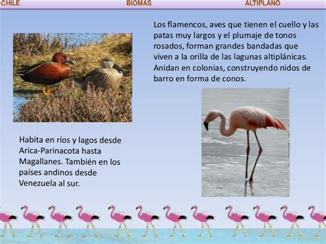 Los Biomas de Chile.