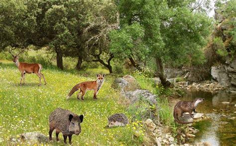 los bosques: El Bosque Mediterraneo