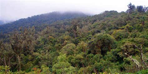 Los bosques mediterráneos y la necesidad de conservar en ...