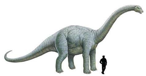 Los braquiosaurios   Taringa!
