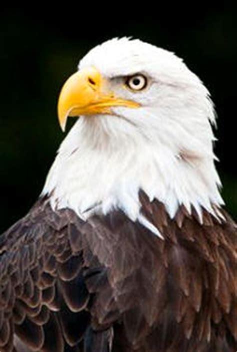 Los buitres o las majestuosas águilas, son aves rapaces ...