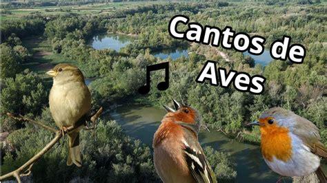 Los cantos de aves más hermosos   YouTube   Aves, Canto ...