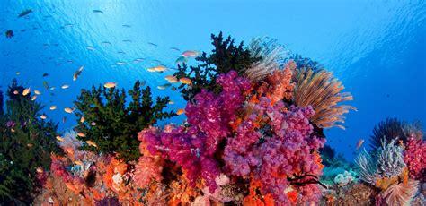 Los Corales Del Fondo Del Mar   Patricia Expósito