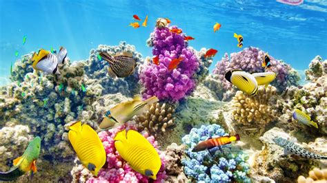 Los datos más curiosos sobre las esponjas marinas