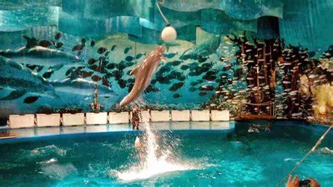Los Delfines del Zoo de Barcelona Trendy U blog de ...