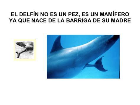 Los delfines pps