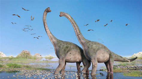 Los dinosaurios conquistaron la Tierra tras una extinción ...