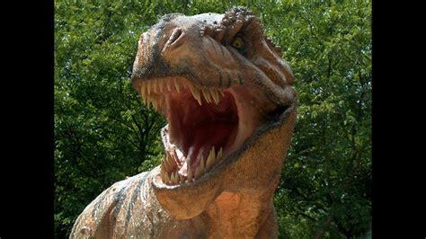 Los dinosaurios, dibujos animados para los niños   YouTube