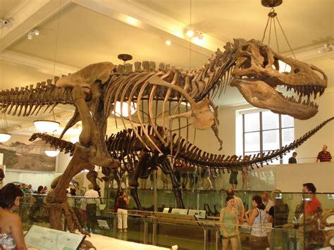 los dinosaurios: mayo 2012