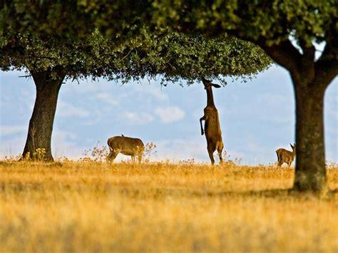 Los ecologístas denuncian ante Parques Naturales y la ...