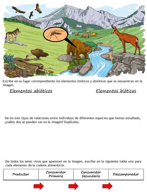 Los ecosistemas   Ficha interactiva