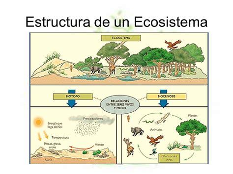 Los Ecosistemas: Los Ecositemas