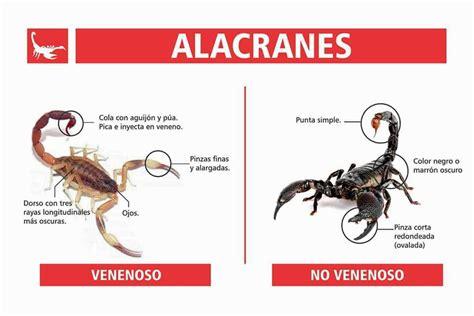 Los escorpiones y sus principales características ...