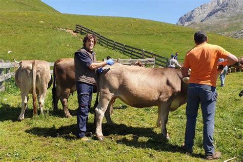 Los farmacéuticos de Cantabria realizan un tratamiento ...