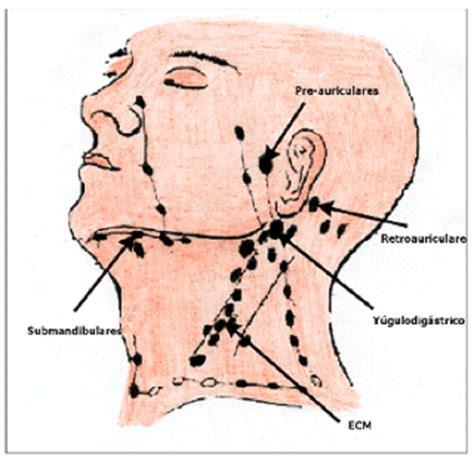 Los ganglios linfáticos cervicales   Remedios caseros