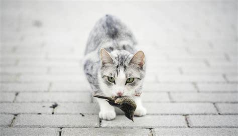 Los gatos, enemigos de especies en extinción   Blog Mundo ...