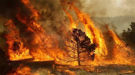 Los incendios en el cambio climático   Catalunya Vanguardista