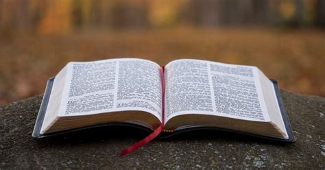 Los libros de la Biblia, cómo están organizados y de qué ...