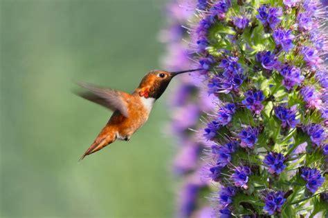 Los mejores colores para atraer a los pájaros a tu patio