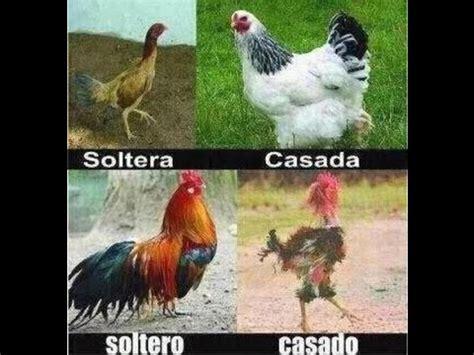 Los mejores memes de Solteros vs Casados   YouTube