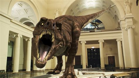 Los mejores museos de dinosaurios   YouTube
