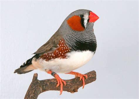 Los mejores pájaros para tener como mascota en nuestra casa