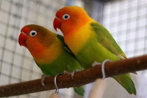 Los mejores pájaros para tener como mascota en nuestra ...