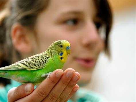Los mejores pájaros para tener de mascota   Todo mascotas