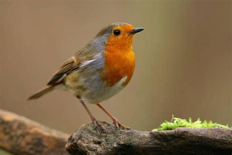 Los mejores pájaros para tener en casa como mascotas ...