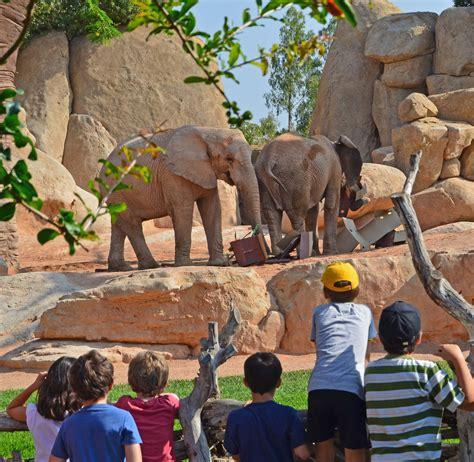 Los niños de Expedición África de Bioparc Valencia colocan ...