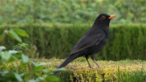 """Los pájaros de las ciudades se hacen más """"salvajes"""" por el ..."""