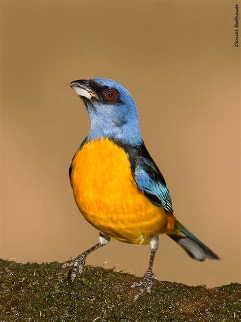 Los pájaros más bonitos de la Argentina [MEGAPOST]   Bird