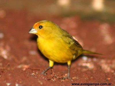 Los pájaros más bonitos de la Argentina [MEGAPOST ...