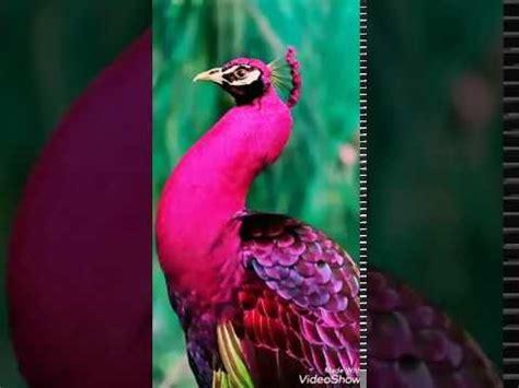 Los pájaros más lindos del mundo   YouTube