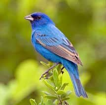 Los pájaros perciben muchos más colores que el hombre ...