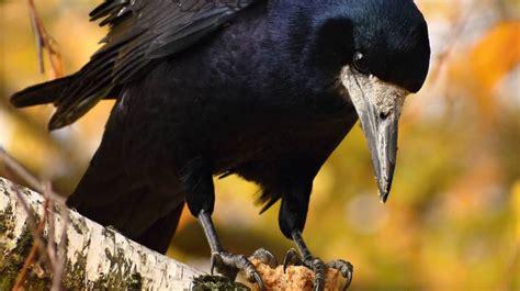 Los pájaros son mucho más listos de lo que pensamos ...