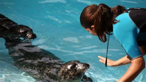 Los problemas de las focas del zoo de Barcelona