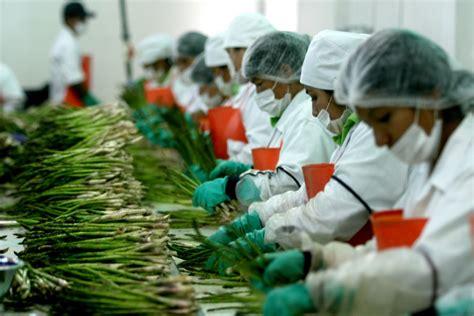 Los productos agricolas que más produce México   Grupo SACSA