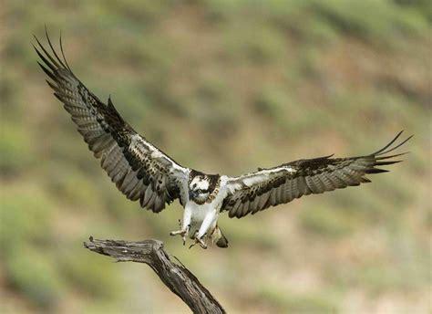 Los 'cazadores' de las imágenes imposibles de las aves rapaces