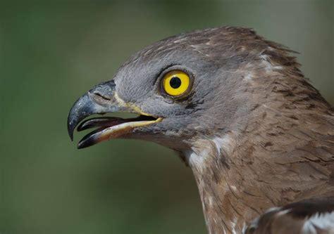 Los secretos de la migración de las aves, al descubierto ...