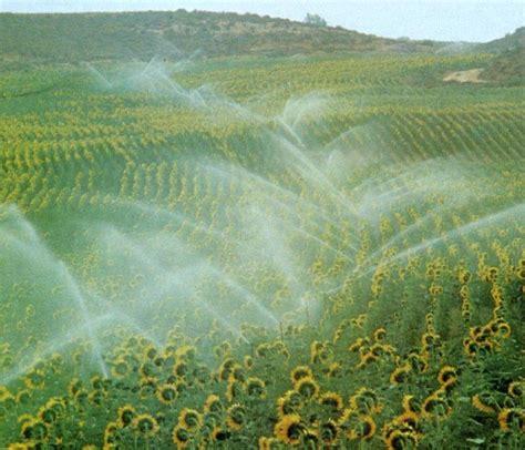 LOS SECTORES ECONÓMICOS: 3. LA AGRICULTURA